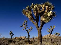 Joshua Tree National Park/