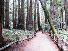 Muir Woods en Wine Country/